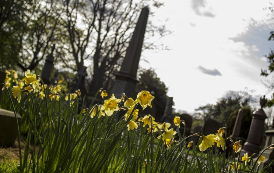 Cemetery in Scarborough, North Yorkshire by L.Hardwick Photography